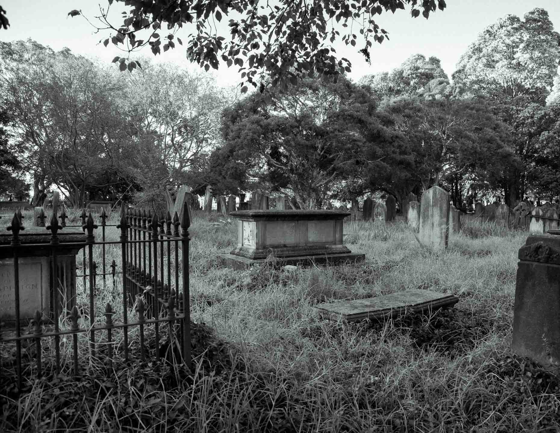 The Planthunter x Daniel Shipp - Cemeteries